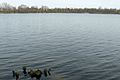 Lusowskie Lake x (2).JPG