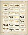 MA I437891 TePapa Plate-XXX-The-butterflies full.jpg