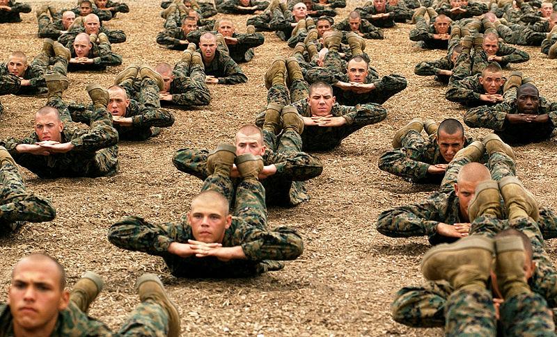 Poussins de corps de marine