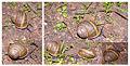 MK-snail006d.jpg