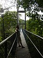 MacRitchie Reservoir Nature Reserve (2652601600).jpg