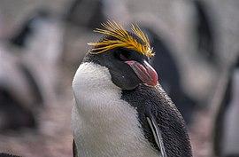 grappige pinguin filmpjes