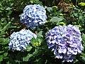 Madeira - Monte - Jardim Tropico (2092631129).jpg