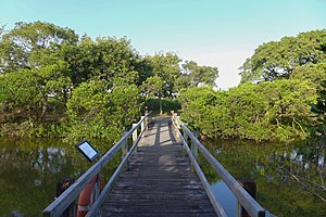 Mai Po Marshes - Mangrove boardwalk