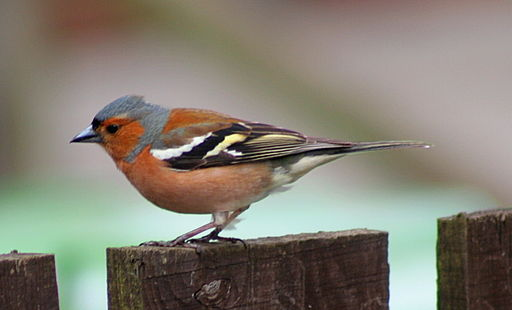Bird Declines