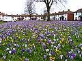 Margaret Creighton Gardens - geograph.org.uk - 727787.jpg