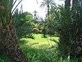 Marrakesh - 2008 - panoramio (66).jpg