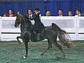 """Mary Gaylord McClean and the Saddlebred Mare """"According to Lynn"""" (2797700865).jpg"""