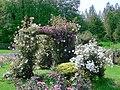 Massif de roses.jpg
