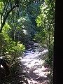 Mata ciliar - Floresta protetora 5.jpg