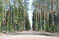Meža ceļš, Ogresgala pagasts, Ogres novads, Latvia - panoramio (1).jpg