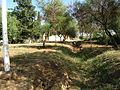 Memorial Ruines Zmala Emir Abdelkader - (4).JPG