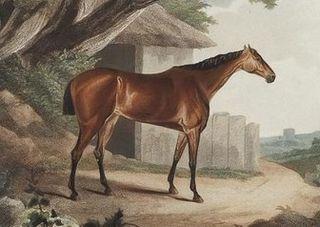 Meteora (horse) British-bred Thoroughbred racehorse