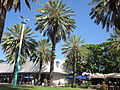 Miami Beach Lincoln Mall Palms.JPG