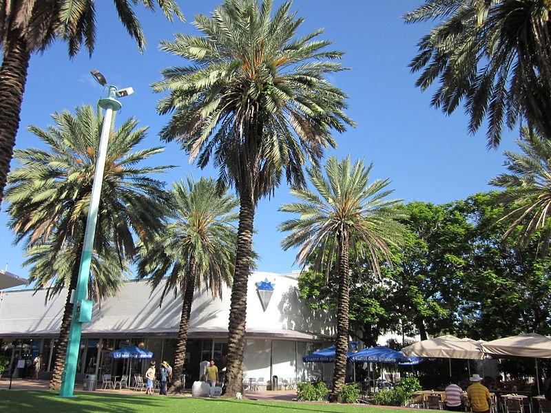 800px-Miami_Beach_Lincoln_Mall_Palms.JPG