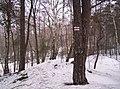 Mikolow, Poland - panoramio (86).jpg