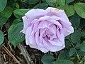 Minamata Rose Park2.JPG