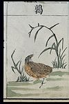 Ming herbal (painting); Quail Wellcome L0039451.jpg