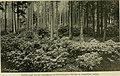 Mitteilungen der Deutschen Dendrologischen Gesellschaft (1912) (14775249474).jpg