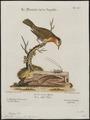 Mniotilta vermivora - 1700-1880 - Print - Iconographia Zoologica - Special Collections University of Amsterdam - UBA01 IZ16300025.tif