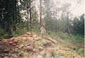 Monkey near Grand Bassin (3040330895).jpg