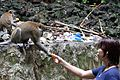 Monkey on Batu Caves 1.jpg