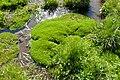 Montia fontana (mezenc, 43, France).JPG