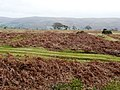 Moorland above the Edw - geograph.org.uk - 693291.jpg