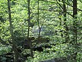 Morile de apă din Eftimie Murgu (2).JPG