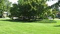 Morton Park.jpg