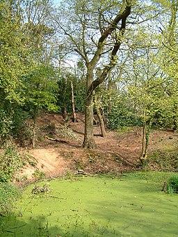 Moseley Bog - geograph.org.uk - 89202