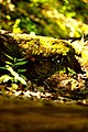 Moss-covered stone-step (5668775225).jpg