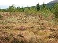 Moss Raploch, looking east - geograph.org.uk - 1574942.jpg