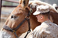 Mountain Warfare Training Center teaches advanced horsemanship 130904-M-EV518-1862.jpg