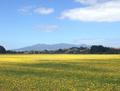 Mt Pirongia (6727).png