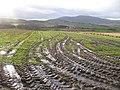Mud, Arthurshiels - geograph.org.uk - 626406.jpg