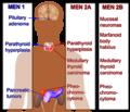 Multiple endocrine neoplasia.png