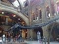 Museo Ciencias Naturales - panoramio.jpg