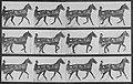 Muybridge, Eadweard - Reuben mit Sulky (0.51 Sekunden) (Zeno Fotografie).jpg