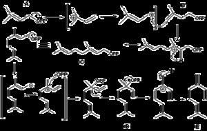 Myrcene - Image: Myrcene Biosynthesis