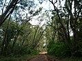 Nairobi Arboretum Park 42.JPG
