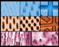 Nanotubes micro view.png