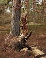 Nationaal Park Drents-Friese Wold. Locatie Dieverzand 002.JPG