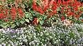 National Botanical Garden of Georgia (HDR Photo, Lg G4) باغ بوتانیکال، شهر تفلیس.jpg