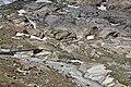Nationalpark Hohe Tauern - Gletscherweg Innergschlöß - 38 - Brücke über den Schlatenbach und Gletscherschliff.jpg