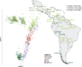 Native American ancestry specific PCA of South American.PNG