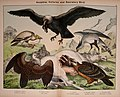 Natural history of the animal kingdom for the use of young people (Plate I) (5974385739).jpg