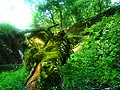 Naturaleza hermosa - panoramio.jpg