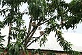Nature 0190628-WA0075.jpg