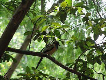 Nature Bird.jpg